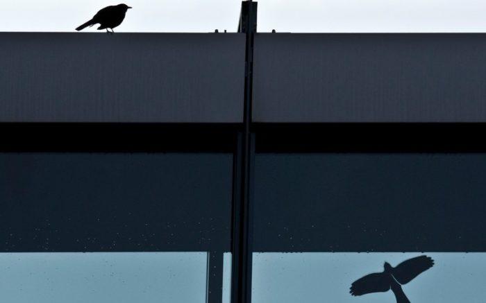 Ein Vogel auf dem Dach eines Hauses, auf dem Fenster darunter klebt ein Warnvogelaufkleber.
