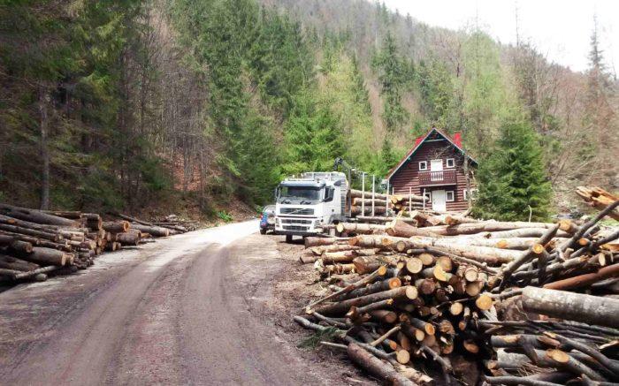 Ein Holztransporter und gerodete Baumstämme an einem Hang