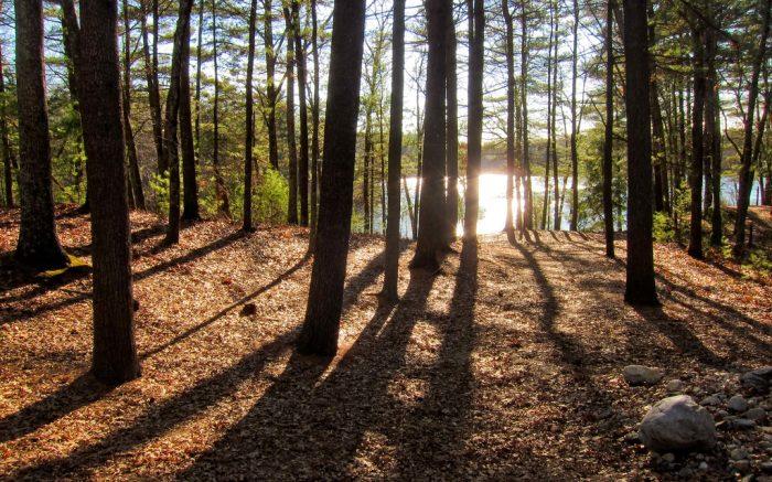 Wald, Blick auf See durch Baeume