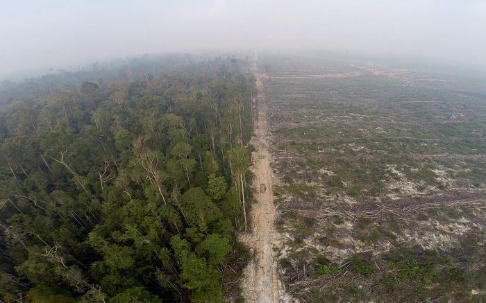 Entwaldung für den Palmoelboom