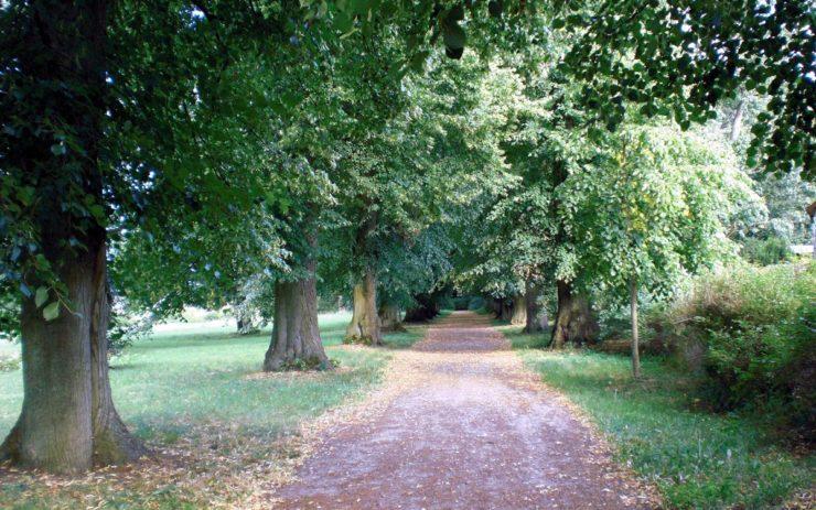 Allee in Prignitz mit alten Bäumen, nah