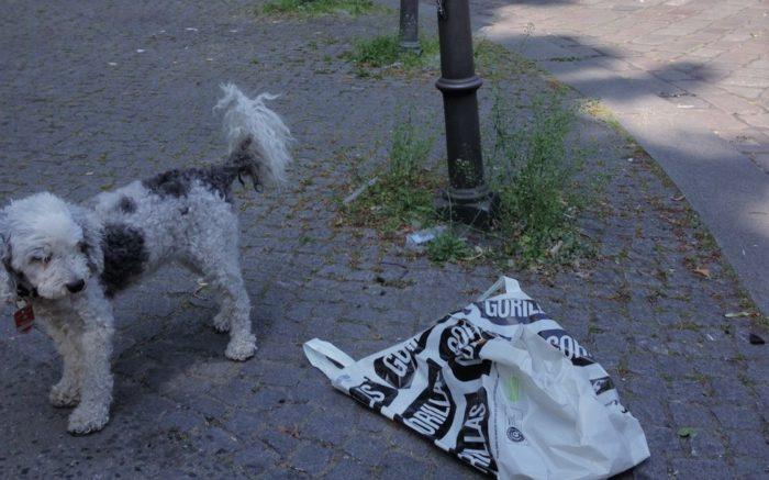 Ein Hund steht neben einer Gorillas-Plastiktüte, die zerknüllt auf dem Gehweg liegt